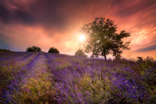 Photo free lavender, lavender field, flowers