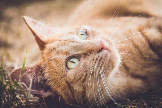 Photo free kitten, lying, close
