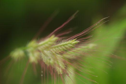 Бесплатные фото крупным планом,фотография,растительность,трава семьи,трава,макросъемка,флора,стебель растения,дикая природа,растение,орда,товар