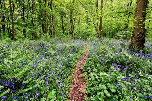 Бесплатно лес, фото лучшие цветы