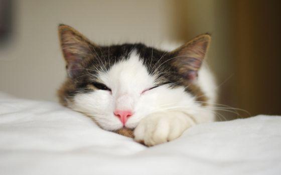 Photo free cat, paws, sleeping