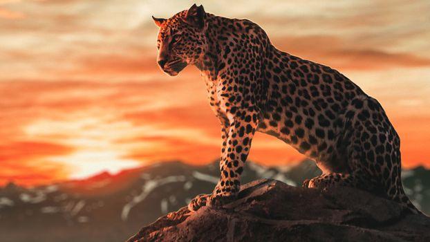 Photo free cheetah, animals, cats