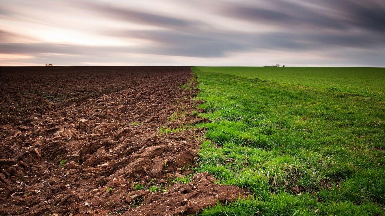 Фото природа семейство травянистых пастбище - бесплатные картинки на Fonwall