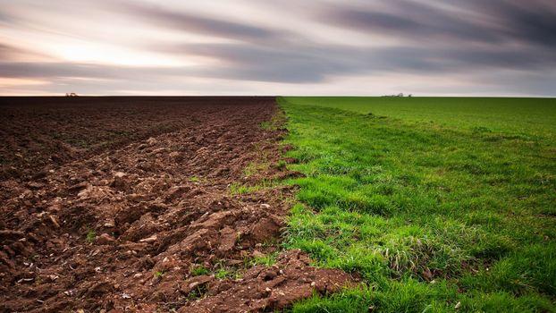 Фото бесплатно природа, семейство травянистых, пастбище