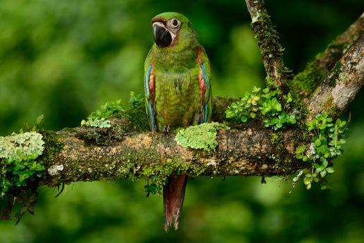Фото бесплатно Ара, зеленый, попугай