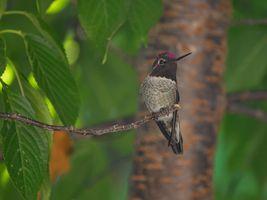 Фото бесплатно природа, ветвь, птица