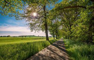 Заставки поле, дорога, деревья, пейзаж