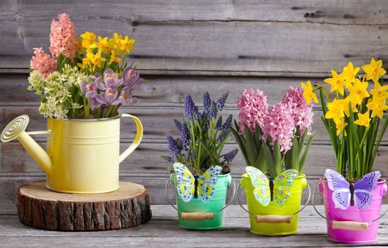 Photo free spring, decor, musky