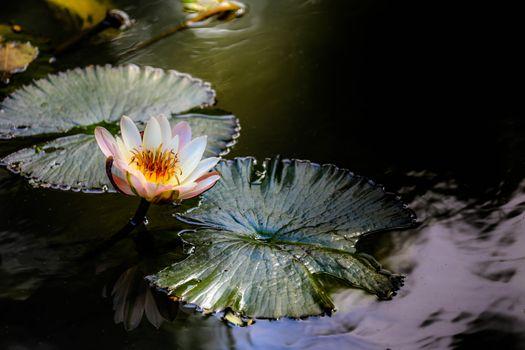 Фото бесплатно водная красота, пруд, цветок
