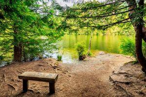 Бесплатные фото река,берег,деревья,лес,лавочка,пейзаж