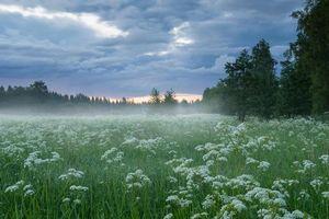 Бесплатные фото закат, поле, деревья, цветы, пейзаж