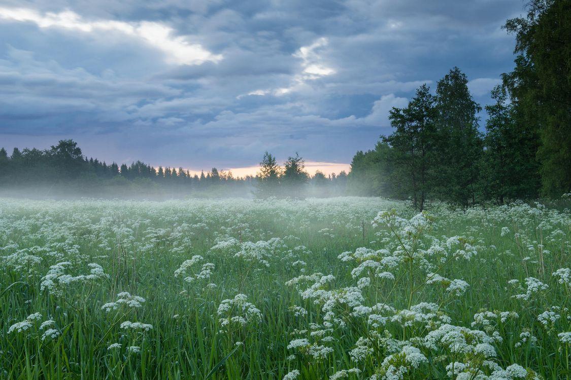 Фото бесплатно закат, поле, деревья, цветы, пейзаж - на рабочий стол