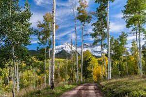 Фото бесплатно осень, горы, деревья