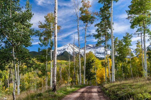 Фото бесплатно дорога в лесу, деревенская дорога, пейзаж