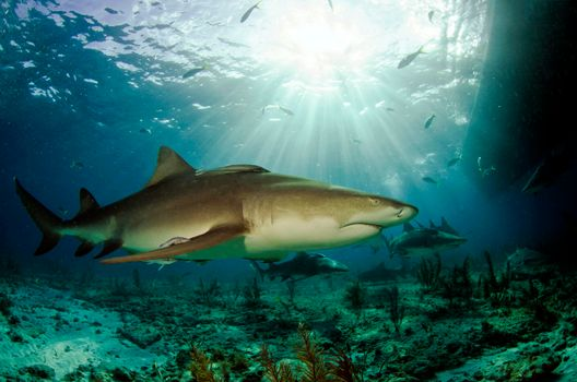 Фото бесплатно Акулы, морское дно, Морские обитатели