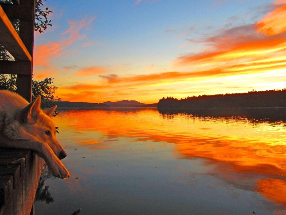 Фото бесплатно озеро, закат, собака - на рабочий стол