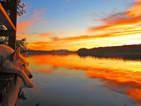 Фото бесплатно озеро, закат, собака