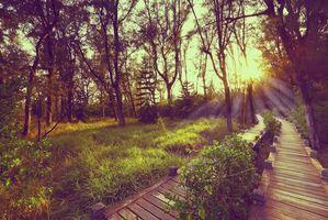 Бесплатные фото Taiwan, Мост, настил, закат, лес, деревья, парк