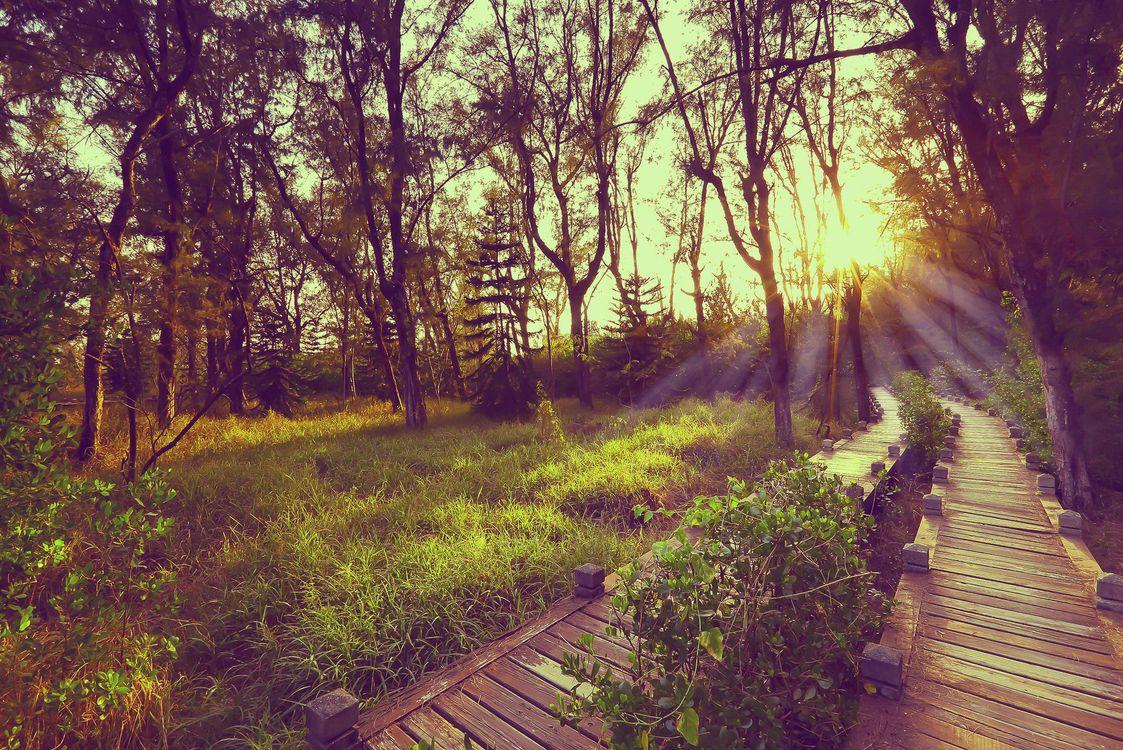 Фото бесплатно Taiwan, Мост, настил, закат, лес, деревья, парк, дорога, пейзаж, пейзажи