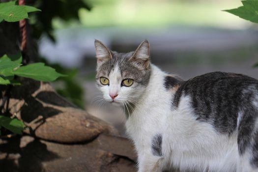 Фото бесплатно кошка, просмотреть, глядит в сторону