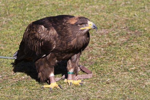 Фото бесплатно Орла, стоя, трава