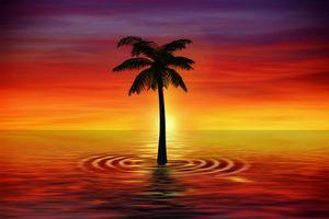 Заставки пальмы,искусство,сумерки,море,palm,art,twilight