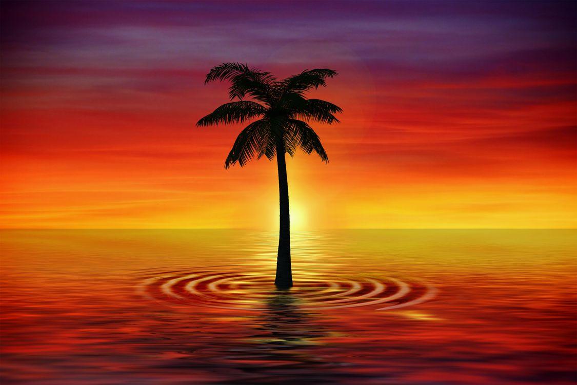 Фото бесплатно пальмы, искусство, сумерки, море, palm, art, twilight, sea, рендеринг