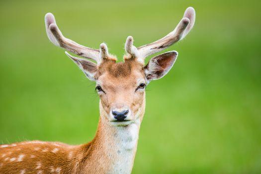 Photo free deer, look, animals