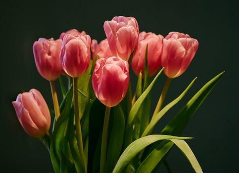 Букет тюльпанов · бесплатное фото