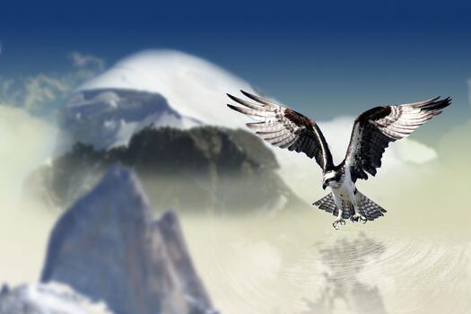 Фото бесплатно вода, зима, птица