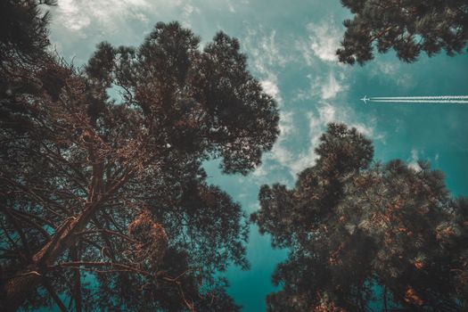Photo free airplane, trees, sky