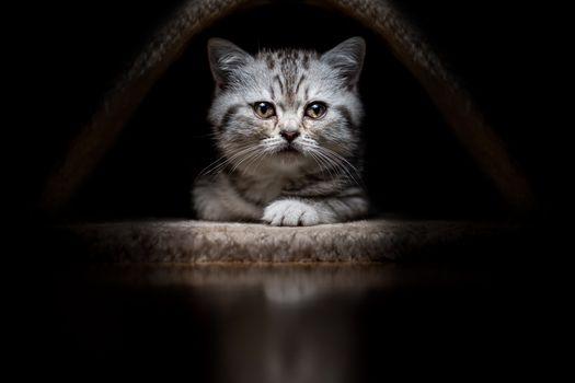 Заставки котенок, кошка, мордочка