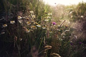 Бесплатные фото ромашки,природа,фотография,макро,растения,солнечный свет,белые цветы