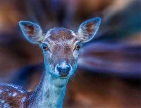 Заставки олень, животное, взгляд