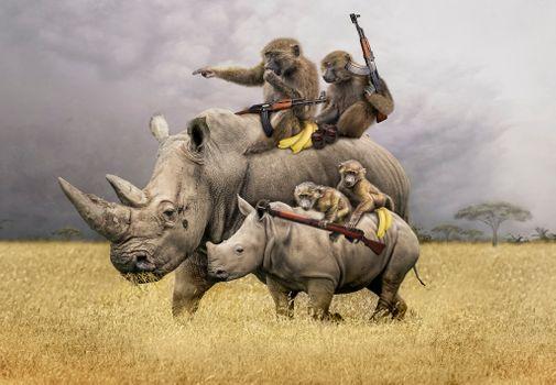 Фото бесплатно поле, носороги, обезьяны