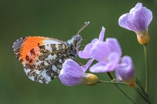 Фото бесплатно бабочка, насекомое, животное