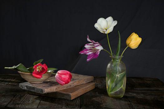 Фото бесплатно цветы, многоцветный, тюльпан