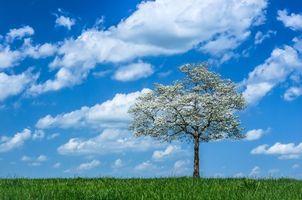 Обои поле, трава, небо, облака, дерево, цветы, цветение, весна, пейзаж