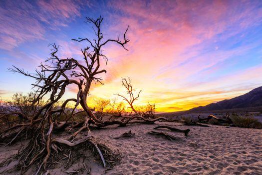 Бесплатные фото Рассвет в дюнах
