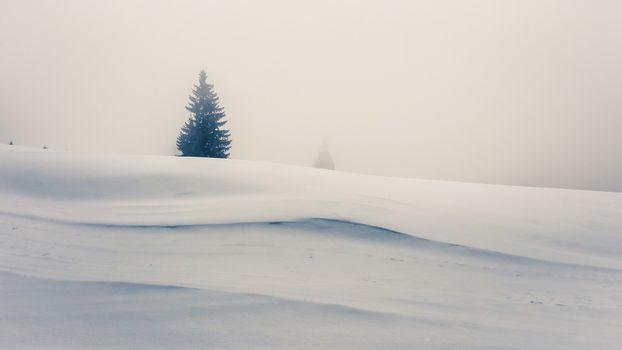 Заставки снег, зима, одинокое дерево