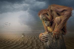 Фото бесплатно ночь, Орангутанг, воин