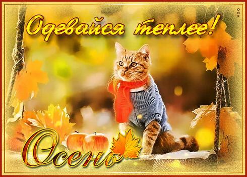 Postcard free scarf, dress warmer in the fall, cat
