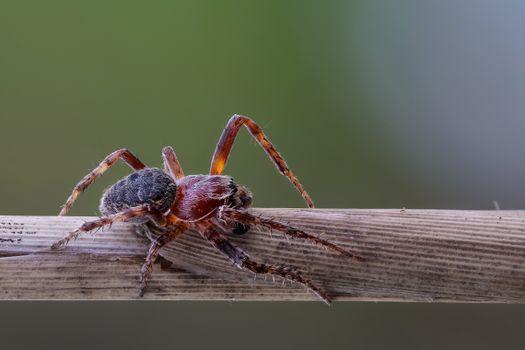Фото бесплатно членистоногие, насекомые, пауки