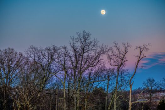 The branches of the trees and the Moon · free photo