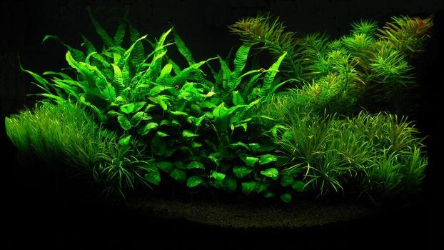 Photo free grass, branch, moss