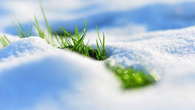Фото бесплатно трава, капли воды, снег