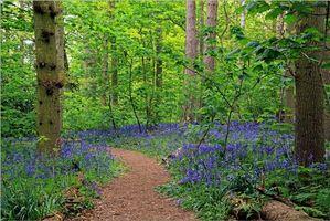 Заставки тропинка, лес, цветы