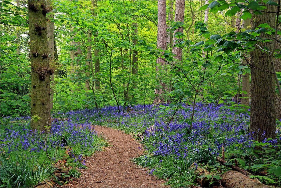 Фото бесплатно тропинка, лес, цветы - на рабочий стол