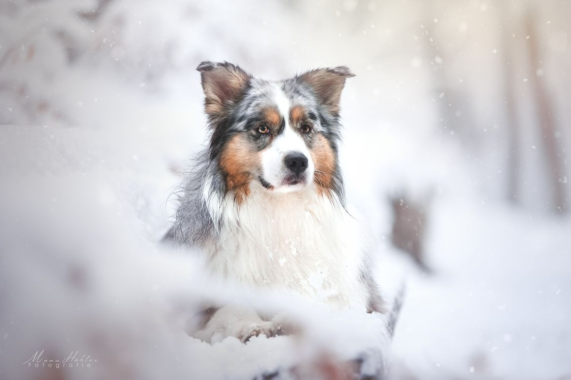 Обои зима, стрельба, собака картинки на телефон