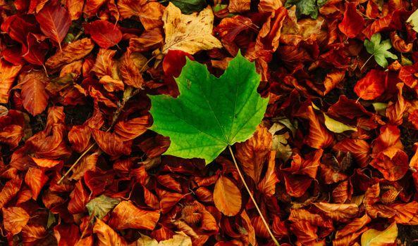 Photo free leaf, autumn, fall